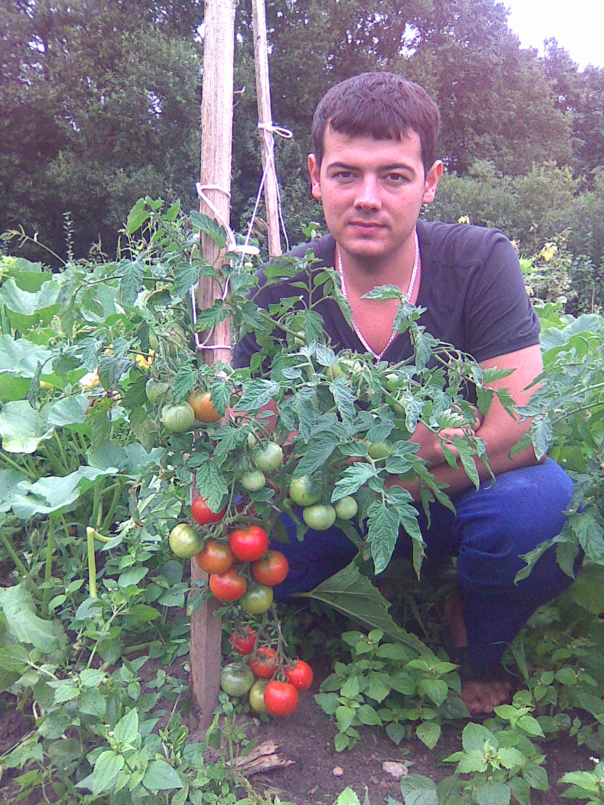 ляна томат фото отзывы